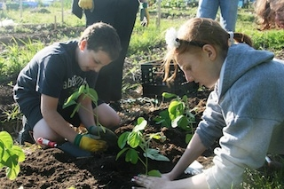 B'nai mitzvah students from Temple Emanu-El in Toronto plant soybeans at the Kavanah Garden.    (Courtesy of Kavanah Garden)